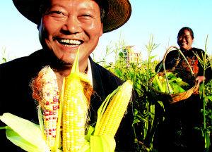 一号文件引领9亿农民喜获丰收(图)