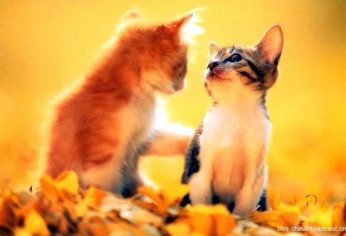 动物趣闻:猫咪们的情侣照