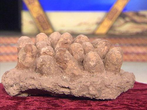 珍贵的恐龙蛋化石
