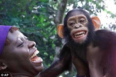人与黑猩猩杂交片_黑猩猩和人杂交视频动物性交配猪 ...