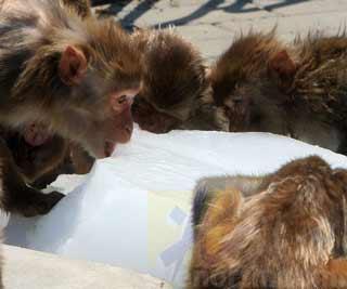 天津持续高温,天津动物园的小动物们