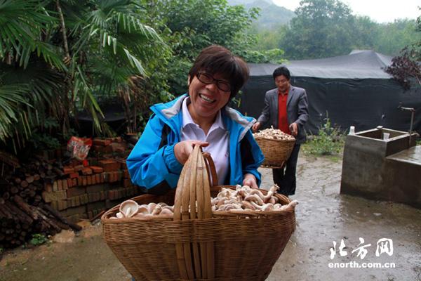 金池院村民普遍种植香菇 携手迈上致富路-小分