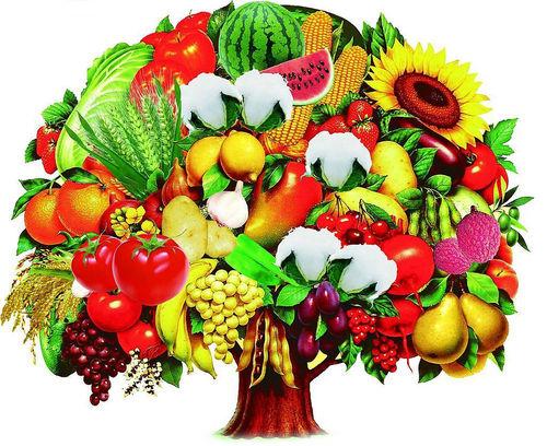 减缓和防止白内障的发展从饮食开始