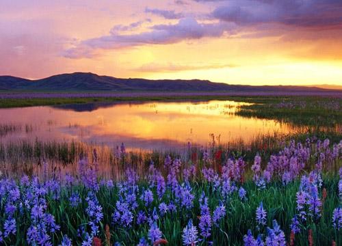 伊犁/当春天的油菜花已无踪影,盛夏的6月将迎来薰衣草花期。