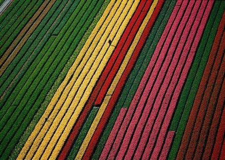 霍夫/推荐理由:每年3/5月份是荷兰国花郁金香盛开的季节,而位于...