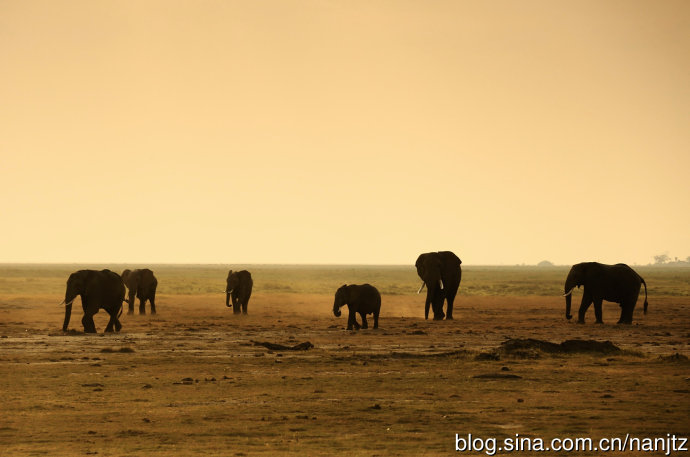 非洲,这个人类的起源地之一,经过漫长的岁月,它的文明发展仍然停留在起步阶段。古老的大陆上,鲜有现代工业的痕迹,随处都是原始先民和野生动物的自由世界。而东非大草原更被誉为是动物的王国,自然界的美丽画廊。肯尼亚位于非洲东部,北连埃塞俄比亚、南苏丹,西接乌干达,南靠坦桑尼亚,东邻印度洋,赤道线从南部穿过,是东非大草原的主要国家。肯尼亚的马赛马拉野生动物保护区,是东非最大的动物保护区,面积达1670平方千米,幅度辽阔。每年7月底,随着旱季的来临,数以百万计的角马、斑马、羚羊、大象等食草野生动物就会组成一支支迁