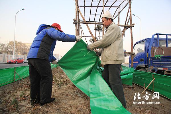 """天津开始冬季园林养护工作 给树木穿""""棉衣"""""""