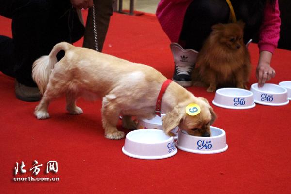 救助流浪动物公益基金成立