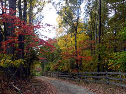 美国秋天风景图片