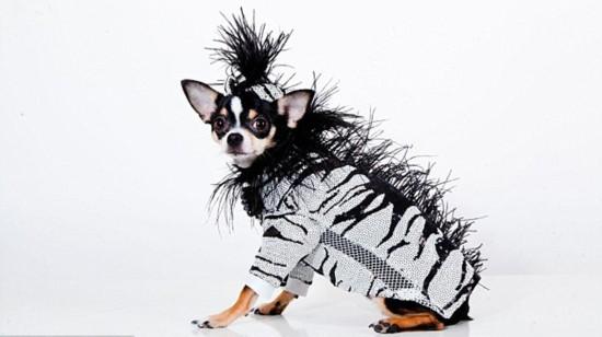 纽约设计师花10年打造宠物时尚服饰帝国