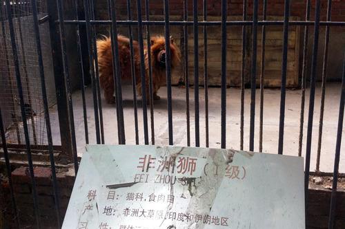 动物管理者没有用资金引进国外品种