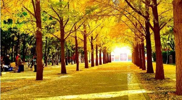 中秋国庆该如何逛京城? 给你一条完美路线