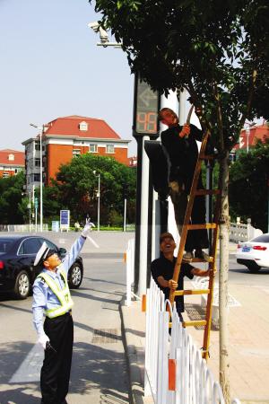 """全市查""""藏在树荫里的信号灯"""" 市民可提供线索"""
