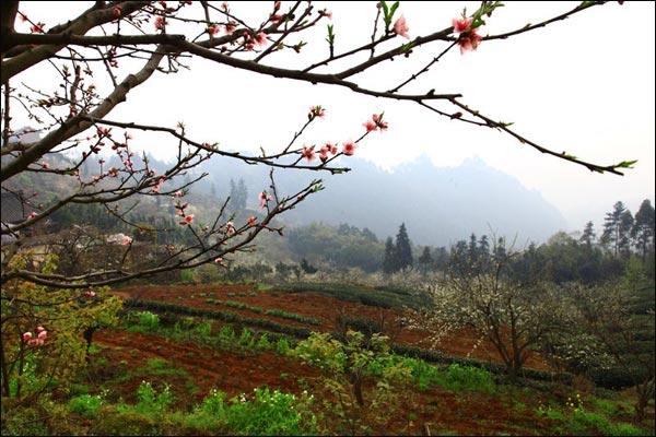 三月仙牙桃花开 峨眉山下惊现最美村落