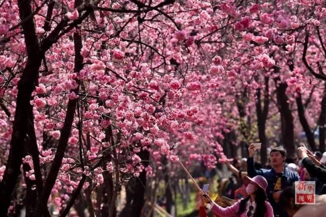今日春分|燕飞犹个个 花落已纷纷