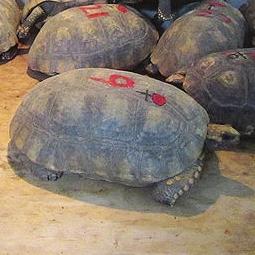4348只萌宝从津城入关 外国动物不是想来就能来
