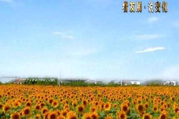 紧跟十九大步伐 宁河新农村建设踏上新征程