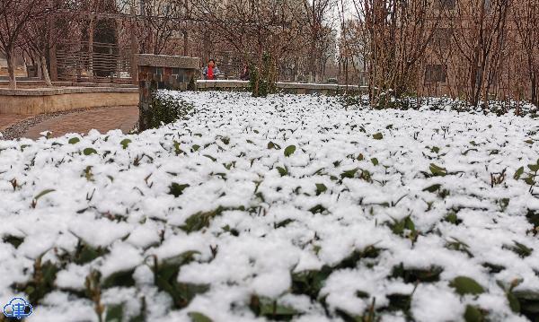 天津迎来2019年冬季第一场雪 快来这里看看!