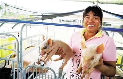 农业农村部:生猪生产恢复发展三