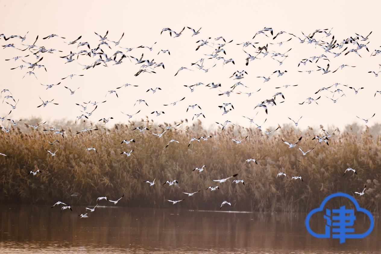 【十三五成就】鸟类258种、植物160余种……七里海已形成完