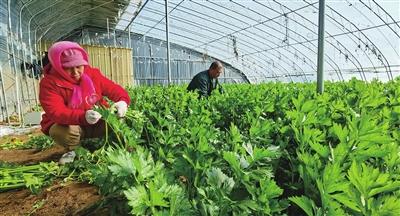 静海区独流镇发展实体经济助推高质量发展