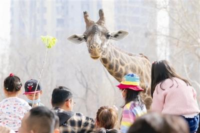 走!去动物园看动物