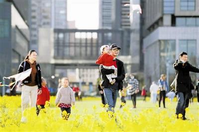 """多处油菜花和樱花迎来盛放期 看""""滨城""""繁花似锦"""